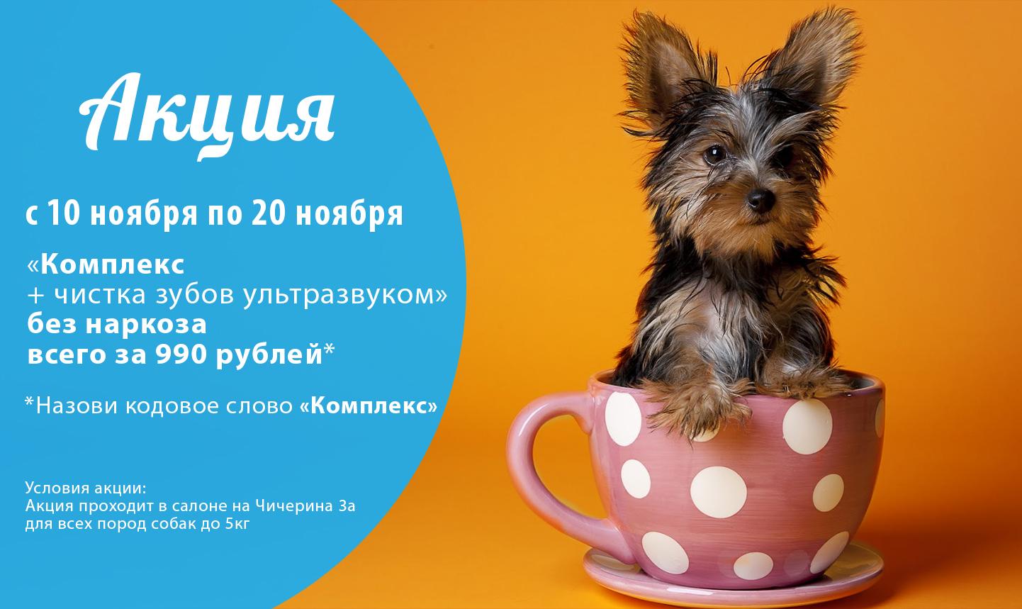 Стрижка собак Челябинск